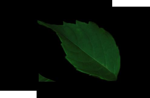 leaf png design